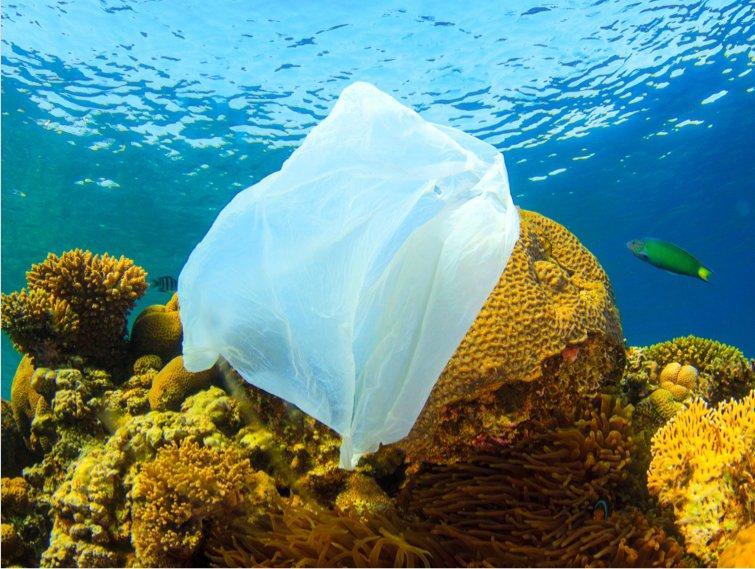 Bag in ocean